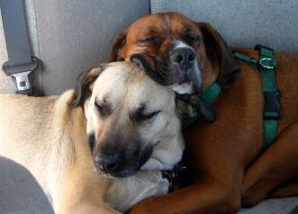 BackseatSnugglers